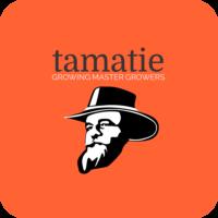 tamatie